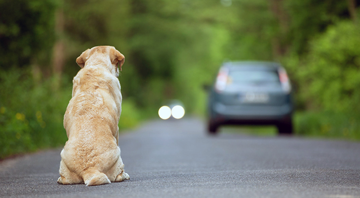 Abbandoni di animali: nella Capitale psicosi per inesistente contagio Covid-19 da cani e gatti