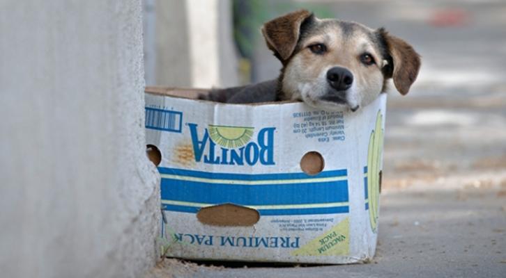 Covid-19. Cani e gatti non trasmettono il virus