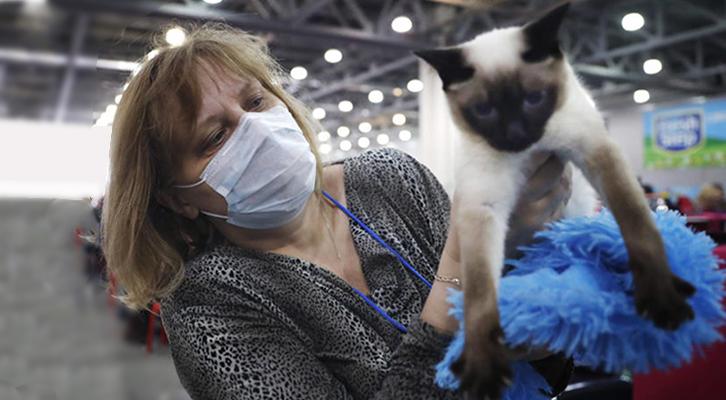 Cani e gatti non trasmettono il Covid-19 all'uomo ma possono essere contagiati