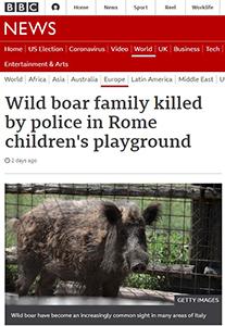 Cinghiali uccisi a Roma. Il servizio della Bbc