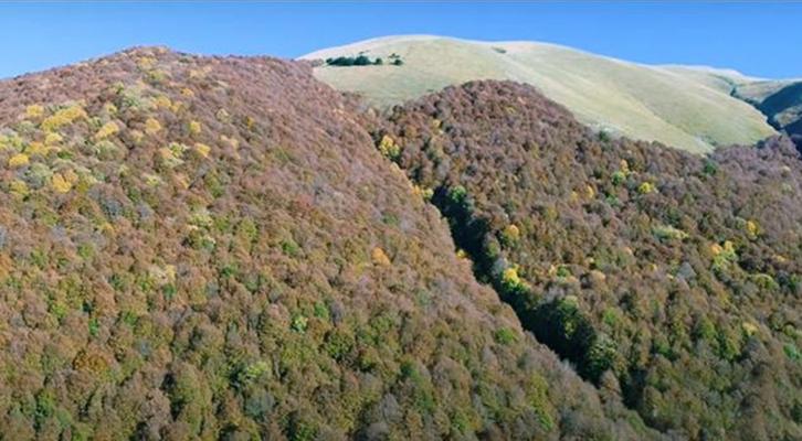 Terminillo. Il bosco di Vallonina è a rischio distruzione