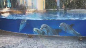 I giovani delfini osservano incuriositi i due scoiattoli