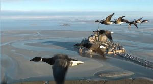 Mont Saint-Michel. Christian Moullec in volo fra gli uccelli