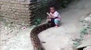 Il pitone e il bambino. Un'insolito animale da compagnia