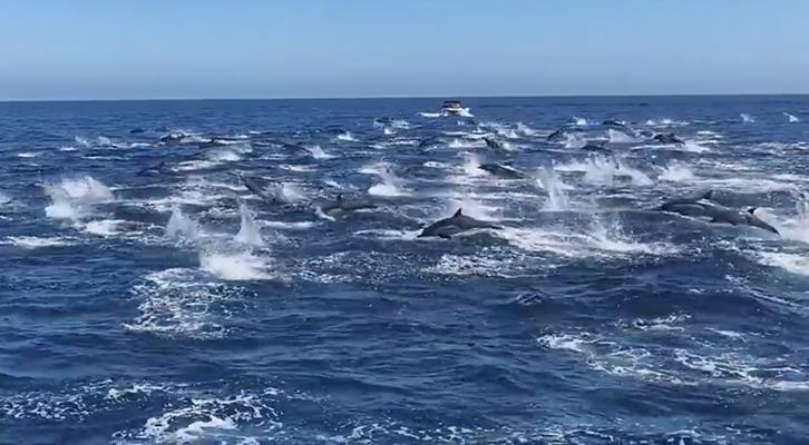 La carica <br>dei 300 delfini