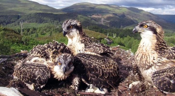 Nel nido <br>dei falchi pescatori
