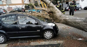 Gli alberi caduti a Roma per il vento del 28 dicembre. Via Conca d'Oro