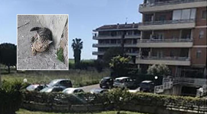 Prosegue la strage di gatti <br>a Santa Palomba
