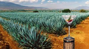 Un cocktail a base di tequila e peperoncino rosso