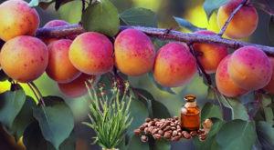 Uno spray doposole a base di albicocca, jojoba e palmarosa