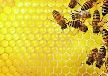 Tra gli ingredienti del balsamo la cera d'api