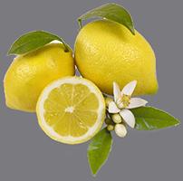 Il rinforzo del Limone